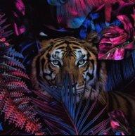 *Diva*