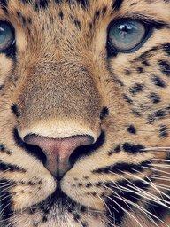 LionX5