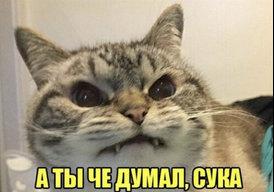 УмЪка