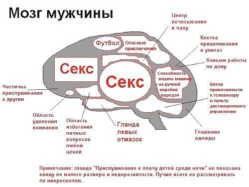 Мозг мужчины