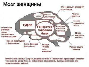 Мозг женщины