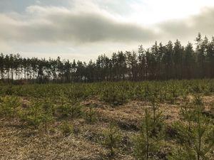 Киевская область, лес